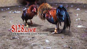 Perjudian Sabung Ayam Terpercaya Se Asia
